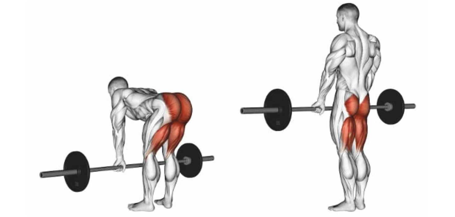 Ultimate 6 Day Gym Workout Schedule