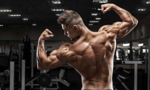 Best Shoulder Exercises for Shoulder Muscles